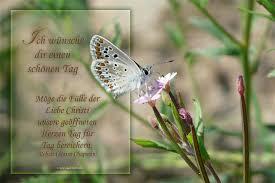 Bläuling Spruchkarte Ich Wünsche Dir Einen Schönen Tag Foto