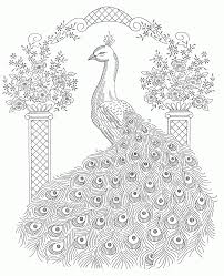 Small Picture Adult Coloring Pages Peacock For For Adults itgodme
