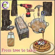 Making Maple Syrup Clipart