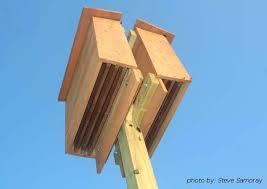 free bat house plans bat house plans free bat house plans canada