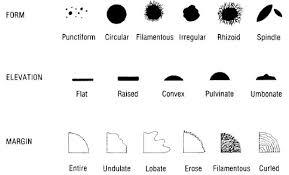 Asmscience Colony Morphology Protocol