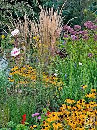 drought resistant garden. Interesting Drought Reliable DroughtTolerant Plants Pinterest Flowers For Drought Resistant Garden E