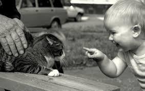 Hasil gambar untuk pinterest kid and cats