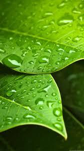 green leaf water drops 720x1280 samsung