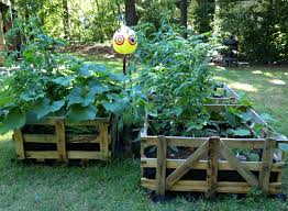 raised bed garden in a pallet crate