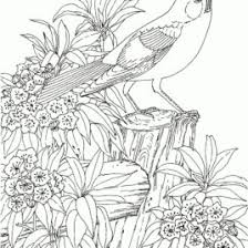 Small Picture Coloring Pages Of Nature For Adults Archives Mente Beta Most