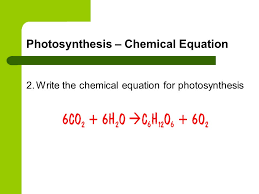what is the chemical equation for photosynthesis in word form