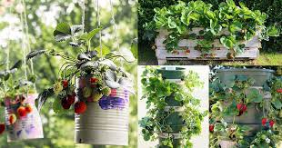 9 unbeatable diy ideas for growing strawberries in a little to no e