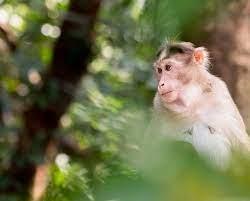 Chinese veterinarian dies from rare Monkey B virus - The Washington Post