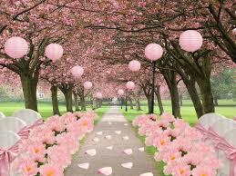 cherry blossoms wedding cherry blossom wedding 2072900