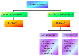 Animal Kingdom Classification Chart By James Infogram