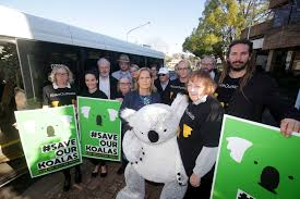 Image result for WILTON COMMUNITY OPPOSE DEVELOPMENT TO SAVE KOALAS