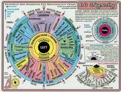 Toni Miller Iridology Chart 43 Best Iridology Images Iridology Chart Naturopathy