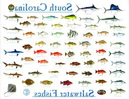 Fresh Ocean Fish Pictures And Names Sketch Species With