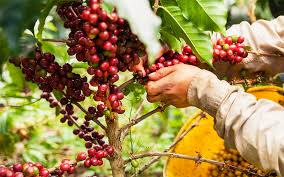 Get great deals on ebay! Colombian Coffee Is The Best One Colombia Country Brand