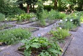 Small Picture Medicinal Herb Garden In Our Nature