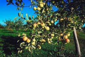 Should Fruit Trees Be Covered In Freezing Temps Home