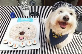 Birthday cakes for your dog ~ Birthday cakes for your dog ~ Recipe raw birthday cake for your dog u mojoandfriends