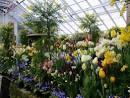 Разведение цветов в домашних условиях