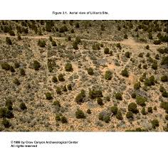 dense sagebrush and tered pinyon and juniper are the most common plants growing on the site with numerous other plants present as well