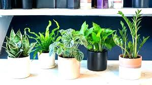 modern office plants. Office Modern Plants