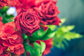 during one such expedition he stopped to take in the greenery of the fields of the rose garden he loved it so much that he named the area nain sukh eye
