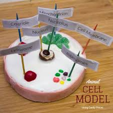 animal cell project candy.  Project Animal Cell Model Using Candy My Little Me And Animal Cell Project Candy M