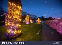 Horticultural Lighting Uk Surrey Uk 19th December 2017 Royal Horticultural Society