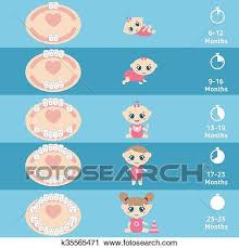 Baby Teething Chart Clipart K35565471 Fotosearch