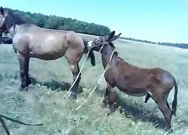 Bestiality Amature Videos / Most popular Page 1