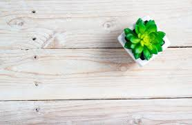 table background. Fine Background Stock Photo  Succulent In Pot Wooden Table Background With Copy Space Throughout Table Background E