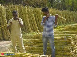 Wilmar Sugar Buys 19 77 Additional Stake In Shree Renuka