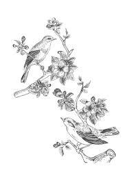 大人の塗り絵鳥と花vol2無料印刷 もくもくん知育プリントキッズ
