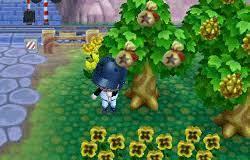 どうぶつ の 森 お金 の 木