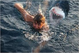 pictures of great white sharks eating people. Interesting Pictures A Blog About Australia Its People Places And Culture Shark Attack Pictures  On Pictures Of Great White Sharks Eating People