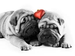 cute animal valentines day wallpaper. Perfect Valentines 1600x1200 Perros Enamorados HD  FondosWikicom For Cute Animal Valentines Day Wallpaper A