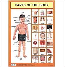 Human Body Parts Chart In English Amazon In Buy Parts Of The Body Chart Body Parts Chart