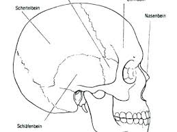 Skull Bones Anatomy Coloring Pages Human Colouring And Crossbones
