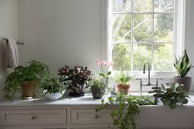 lighting for houseplants. Best Houseplants 9 Indoor Plants For Low Light Gardenista Dimensions 2000 X 1333 Lighting I