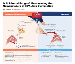 Hpa Axis Is It Adrenal Fatigue Reassessing The Nomenclature Of Hpa Axis