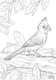 Small Picture Northern Cardinal coloring page Free Printable Coloring Pages