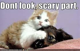 cute kittens and puppies quotes. Wonderful Kittens Funny Cats And Dogs Together Inside Cute Kittens And Puppies Quotes E