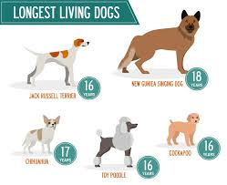 Rat Terrier Age Chart Find Out How Old Your Dog Will Live To