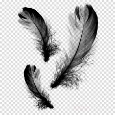 Feather Graphic Design Eye Cartoon Clipart Feather Design Graphics Transparent