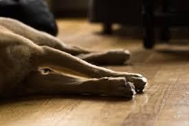 Ich sah, wie der hund mit seinem kopf zwischen den beinen meiner. Hundehaftpflicht Laminat Hundehaftpflicht Ratgeber