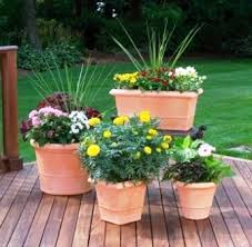 Small Picture Download Potted Garden Ideas Solidaria Garden