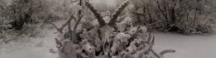 Animal Photo Albums Albums Archives Soundgarden