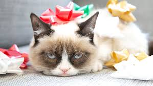 grumpy cat christmas hat. Simple Grumpy This Cat Is SO Over Christmas As It Confused By A Santau0027s Hat In Funny  Video  Metro News For Grumpy Cat Hat