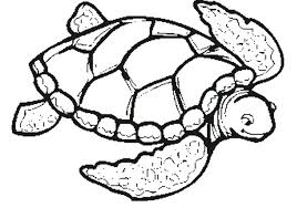 turtle coloring pages. Perfect Coloring Turtle Printable Coloring Pages Sea Sheets Collection  And Turtle Coloring Pages C