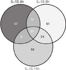 Elements Of A Venn Diagram Venn Diagram Representing Common Elements Of Each Time Point Of Il 1